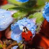 коровка и цветы :: Людмила