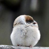 Малышка воробьишка . :: Hаталья Беклова