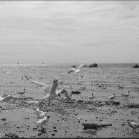 После отлива :: Самохвалова Зинаида