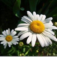 Радуемся красоте :: Лидия (naum.lidiya)