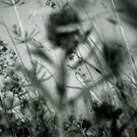 Заплутав  в  летних  травах... :: Валерия  Полещикова