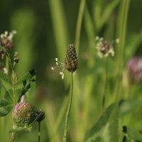 травы :: оксана