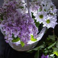 Сирень в цвету :: Константин Батищев