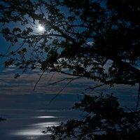 Лунная ночь :: Владимир Новиков