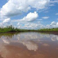 После дождичка в четверг.. :: Андрей Заломленков