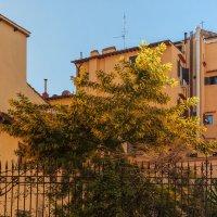 Прогулка по Флоренции :: Надежда Лаптева