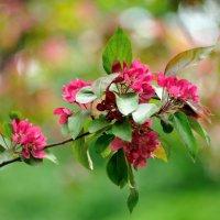 один раз в год сады цветут... #4 :: Андрей Вестмит