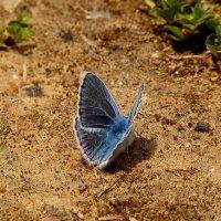 бабочки на земле 3 :: Александр Прокудин