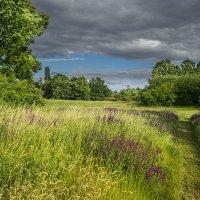 Июнь — время длинных трав и сенокосов. :: Valentina M.