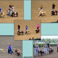 Собачьи бега на ростовском ипподроме :: Нина Бутко