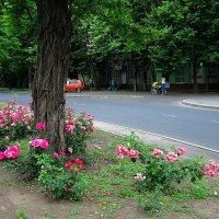 Моя улица ) :: Людмила