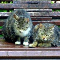 Ревнивый кот :: Сергей Карачин