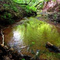 Изумрудный ручей в глубоком лесном овраге :: Андрей Заломленков