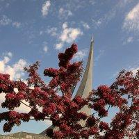 и на марсе будут яблони цвести :: Олег Лукьянов