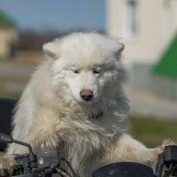 Такси на Дубровку !!! :: Олег Кулябин