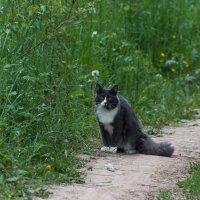 Кот, который гуляет сам по себе. :: Владимир Безбородов