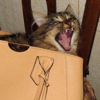 Ну, сплю я ...,удобно... :: Нина Бурченкова.