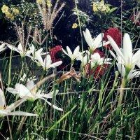 Вечная весна :: Tanja Gerster