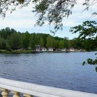 Колтушское озеро :: Елена Павлова (Смолова)