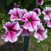 Городские цветы :: Наиля