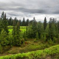 Лес наступает. :: dragonflight78.klimov