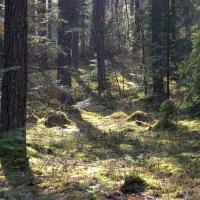 Утро в лесу. :: Нина Бурченкова.