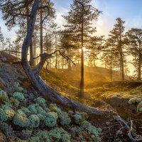 Золотой лес :: Фёдор. Лашков