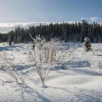 зимний пейзаж-2 :: Галина Щербакова