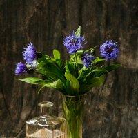 синие цветы :: scbi