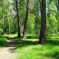В майском лесу :: Милешкин Владимир Алексеевич