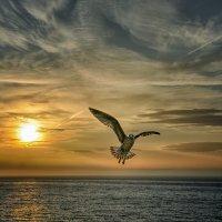 """Утренний полет (Из серии """"Никогда не учите птиц летать..."""") :: Александр Бойко"""