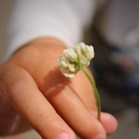 цветочек... :: Анна Шишалова