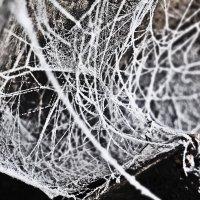 паутина зимой :: Георгий Никонов