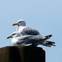 Чайки :: Nina Yudicheva