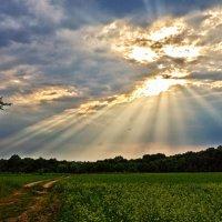 лучи солнца :: юрий иванов