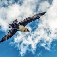 Птицы :: олег