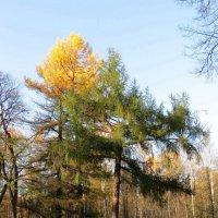 Осенний парк :: Вера Щукина