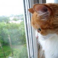 День домашнего кота :: Ирина Аршинова