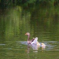 Птица :: Светлана Беляева