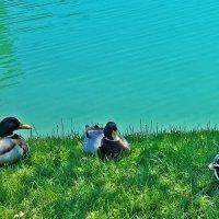 Троица отдыхает :: Светлана