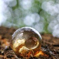 Смола и муравей :: Андрей Майоров