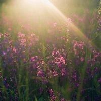 Закат на поле :: Анастасия Жигалёва