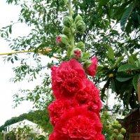 Сочинские цветы :: Антонина Владимировна Завальнюк
