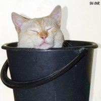 Забавный Снежок или спальное место для котика :: Наталья (ShadeNataly) Мельник
