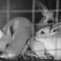 Кролики :: Иван Пархутов