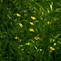 А в траве... :: Юрий