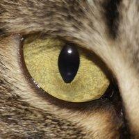 Взгляд охотника :: Mitay Nowill
