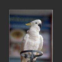Ресторанный попугай. fotoes.ru :: Станислав Польский