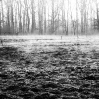 туман... :: vitali bezushka