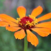 Муха и цветок :: Елизавета Горенкова
